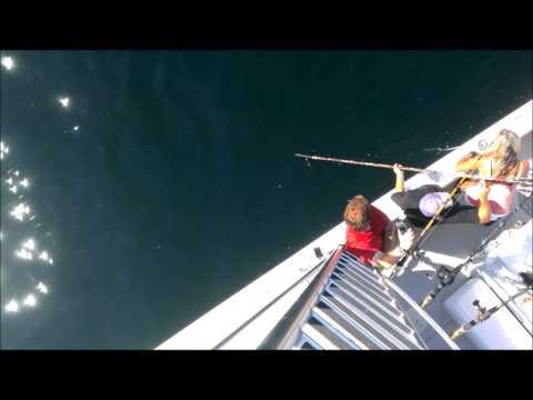 Kaverit kalasteli yli 400 kiloisen tonnikalan