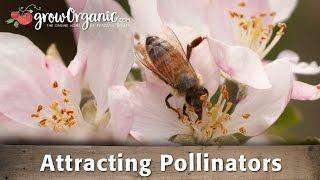 Attracting Pollinators