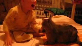 Płaczące dziecko uderza kota. Reakcja zwierzęcia wywołała bardzo dużo kontrowersji
