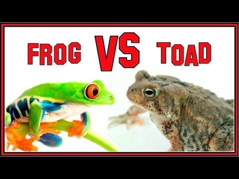 The Difference Between Frogs and Toads.