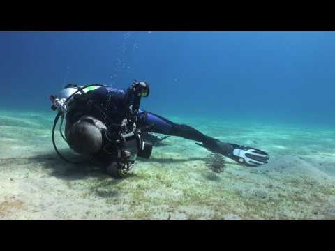 underwater photographer - Video clips used by Martin Edge in the presentation with Alex Mustard at Imperial College, London on 6th Nov 2010 on getting good backgrounds and other techn...