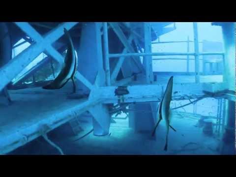 Scuba Dive the HTMS Chang Wreck
