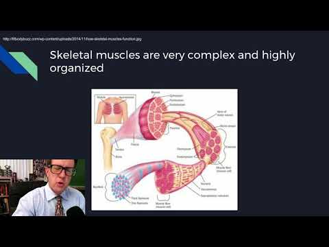 Physiology Lecture 08 Excitable Tissues
