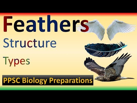 Birds Feathers   Structure   Types   Feather Vs Wing