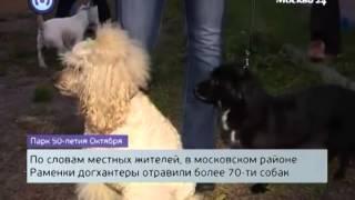 график работы ветеринарной клиники в лосино-петровском