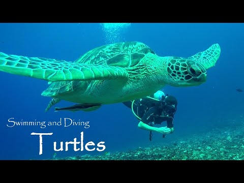 World Turtle Day 2018 - My Tribute to turtles and tortoises