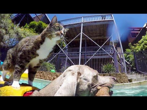 Cat Surfs on a Dog
