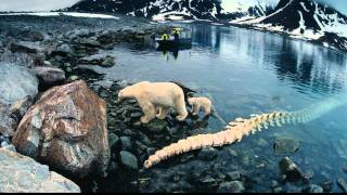 Nonton To The Arctic   Official Trailer  Hd  Film Subtitle Indonesia Streaming Movie Download