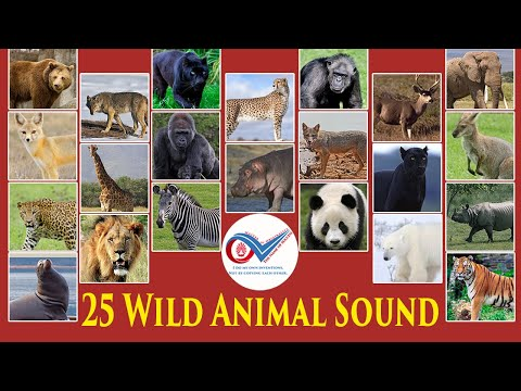 Wild Animals Name and Natural Sound - Learn Wild Animals Species in English with Natural Sound