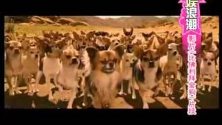 video hài hước về đoạn phim hay nhất, đặc sắc nhất về những chú chó,2015