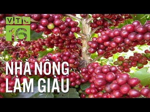 Cà phê trĩu cành nhờ được tưới nước nhỏ giọt I VTC16 - Thời lượng: 9 phút, 28 giây.