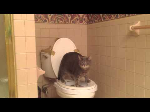 Oscar Cat's Toilet Training