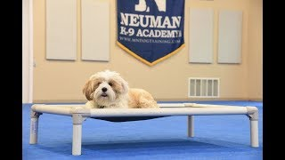 Gracie (Tibetan Terrier) graduated from the dog training boot camp at Neuman K-9 Academy. This program included obedience commands to sit, stay, heel or walk on a loose leash, come when called, proper etiquette, no jumping up, meeting and greeting people under control, and running on a treadmill.Our dog training camp provides programs for the Tibetan Terrier such as boot camp, obedience training, and puppy camp.Neuman K-9 Academy is a professional canine training school that provides board and train (inboard) for dogs, and fully trained dogs for sale.For more information visit: www.mndogtraining.comLocated in Hugo Minnesota just north of Minneapolis and St. Paul (MN).