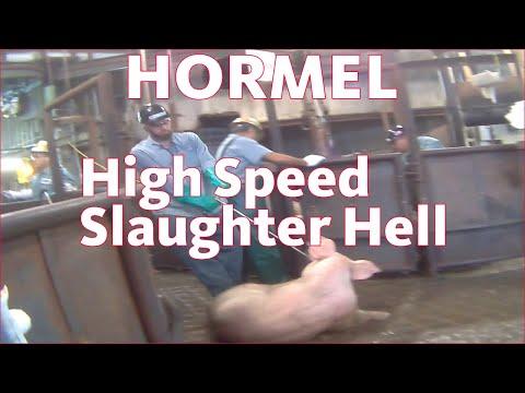 他們潛入豬肉屠宰場偷拍到的畫面,只看10秒就讓大家的心臟壓抑得無法透氣…