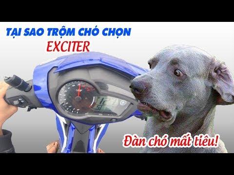 Tại sao Trộm chó dùng Exciter mà không chạy Raider hay Winner để cứu mạng? - Thời lượng: 10:40.