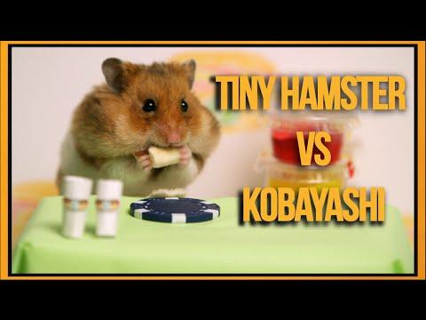 黃金鼠跟「熱狗大賽冠軍」小林尊比賽吃熱狗 誰會贏呢?