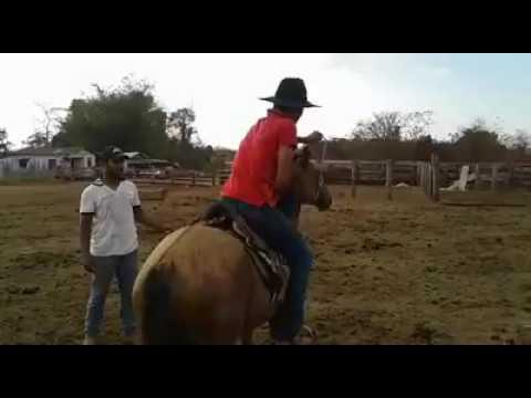 No estilo estradão! !!  Fazenda Resplendor   Alta Floresta D Oeste - RO    Vídeo enviado via whatsAp
