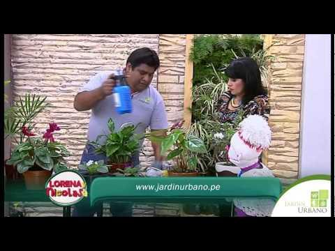 Fertilizar plantas
