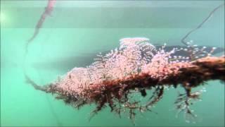 Ciência e Tecnologia ROV_Stinger [PT]