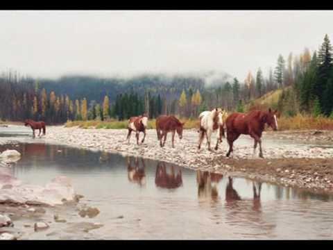 SFO Horses