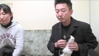 """Nonton 2016年、ネコ映画の本命『猫なんかよんでもこない。』監督と女優ネコ""""のりこ&りんご""""インタビュー Film Subtitle Indonesia Streaming Movie Download"""