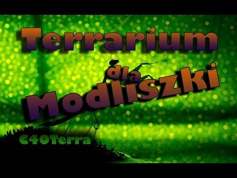 PORADNIK - Terrarium dla Modliszki /C40Terra_Legjobb vide�k: Terr�rium, Viv�rium
