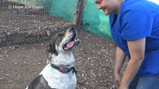 Woman Gets Dragged While Rescuing 110-Pound Abandoned Dog
