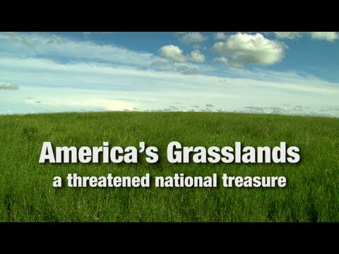 Still image from Western America: Grasslands, a Threatened National Treasure