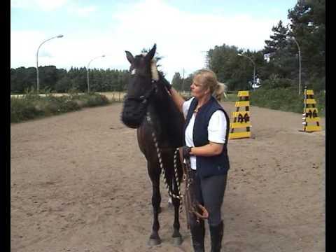 Maulkorb am Pferd anlegen