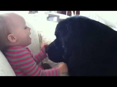 un terranova e il bambino - dolcissimi!