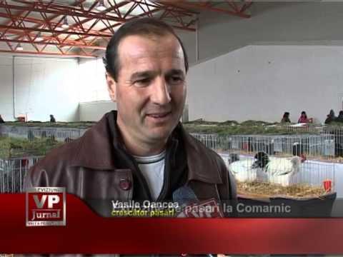 Expoziţie de păsări la Comarnic