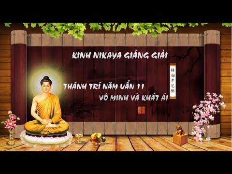 Kinh NIKAYA Giảng Giải – Thánh Trí Năm Uẩn 11 – Vô Minh Và Khát Ái - P1