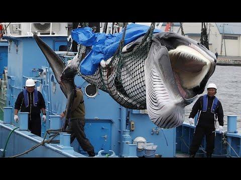 Ξανάρχισε το κυνήγι φαλαινών η Ιαπωνία
