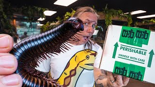 UNBOXING A GIANT AFRICAN MILLIPEDE!! YIKES!! | BRIAN BARCZYK by Brian Barczyk