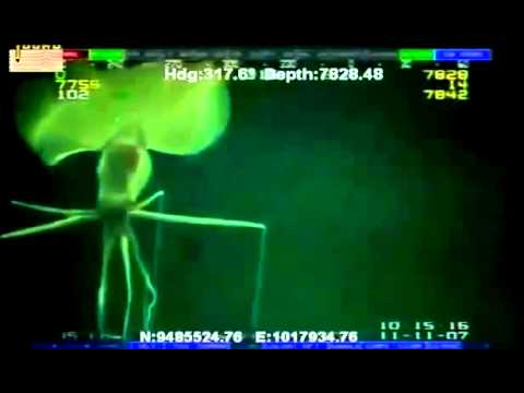 Deep Sea Alien caught on Camera