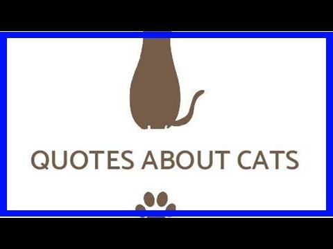 65 Cute quotes about cats