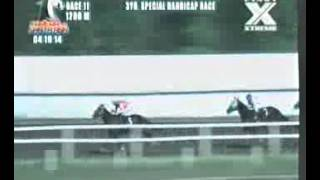 RACE 11 DIXIE GOLD 04/19/2014