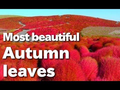Cánh đồng hoa đẹp nhất thế giới