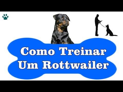 Video Como Treinar Um Rottweiler - Aprenda a Como Treinar Um Cachorro Rottweiler download in MP3, 3GP, MP4, WEBM, AVI, FLV January 2017