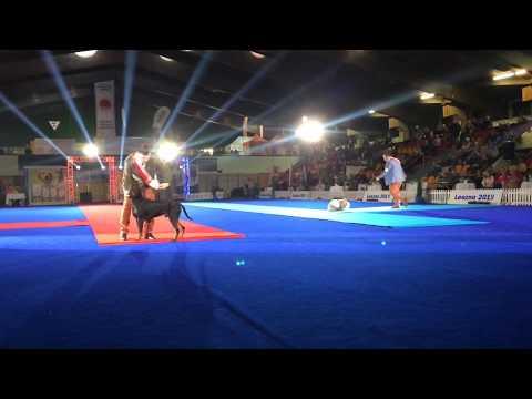 Wideo1: Wielki finał wystawy psów Champion of Champions Show w Lesznie