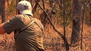 Cape Buffalo Showdown  NMTV  Ep 3 2011