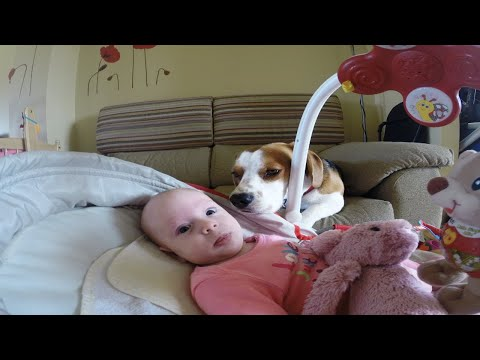 Dog Helps Mom Change Baby's Diaper