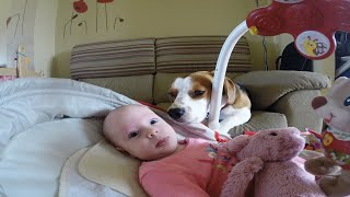 Dog Helps Mother Change Her Baby's Diaper. Best Dog Ever!