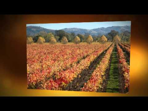 Sonoma County Vineyards and Winery Property Fall Colors