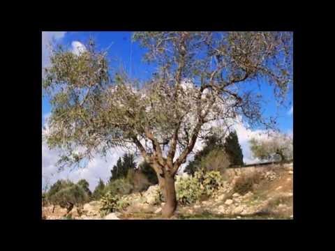 برهام ذاكرة وتاريخ وجمال: زياد جيوسي