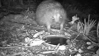 Wildlife Trail Camera - 6.9.2016