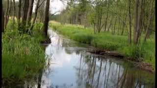 Video 2015-1-17 NATURE VIDEO Rivers&Streams Music:MOZART