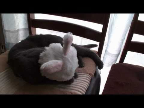 Cat Transforms Into Bunny