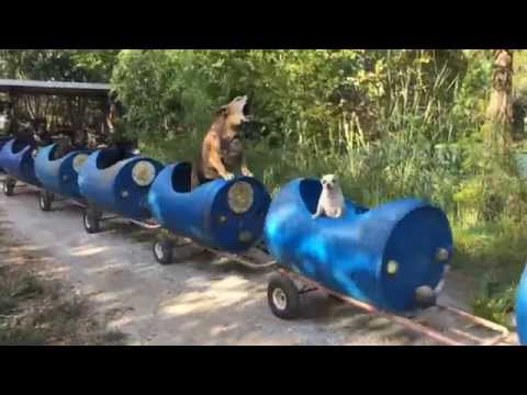 The Dog Train Rolls In Fort Worth