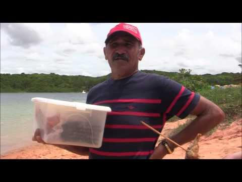 Camarão fedido no Rio Grande do Norte